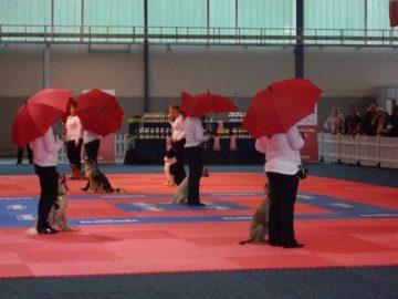 Running-Dogs Dog-Dancer auf CACIB 2013